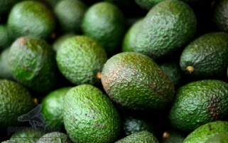 Avocado Stock Photo - Hass Avocados - Food Stock Photo