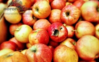Gala Apples – Food Stock Photo Apple