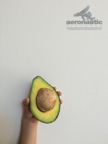 Avocado Stock Photo - Avocado in a Child's Hand - Food Stock Photos