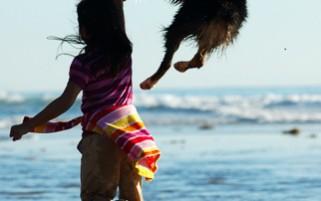 Dog Stock Photos Jumping Australian Shepherd Picture