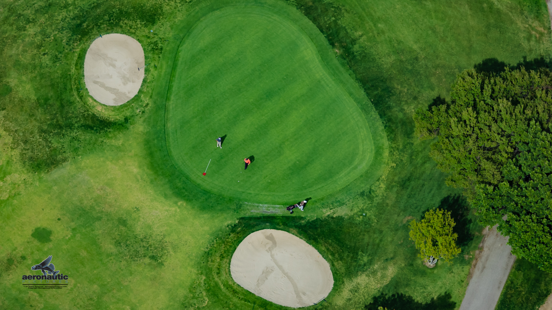 Golfers On Green Putting Golfing Aerial View