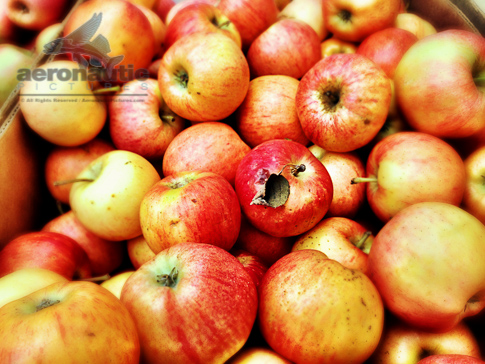 Gala Apples – Food Stock Photo Apple