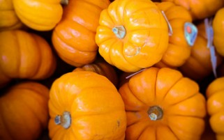 Pumpkin Stock Photos - Pumpkins Picture - Stock Photo