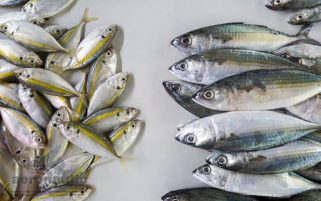 Food Stock Photo - Indian Mackerels & Yellowstripe Scad Fish Download